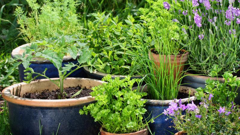 Consejos para cuidar las plantas en primavera y verano
