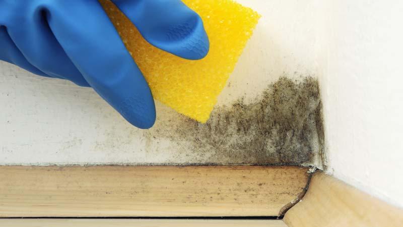 Seis maneras de quitar manchas de moho de la pared