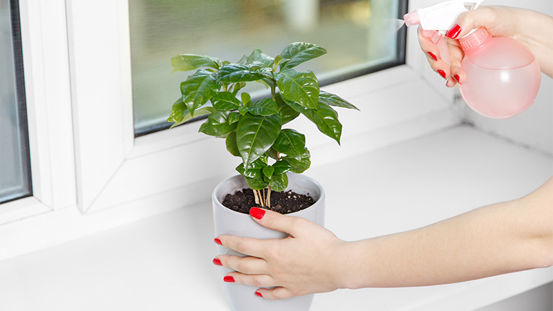 consejos para conservar plantas de interior en casa flota