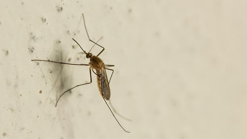 mosquitos en casa
