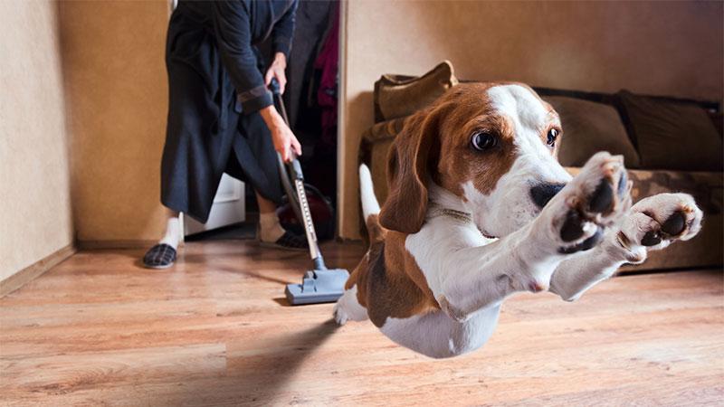 Limpieza de hogar con mascptas
