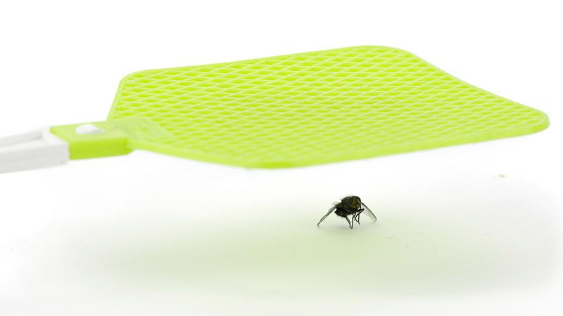 Trucos para ahuyentar a las moscas en casa