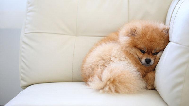 Trucos para limpiar los pelos de las mascotas en casa