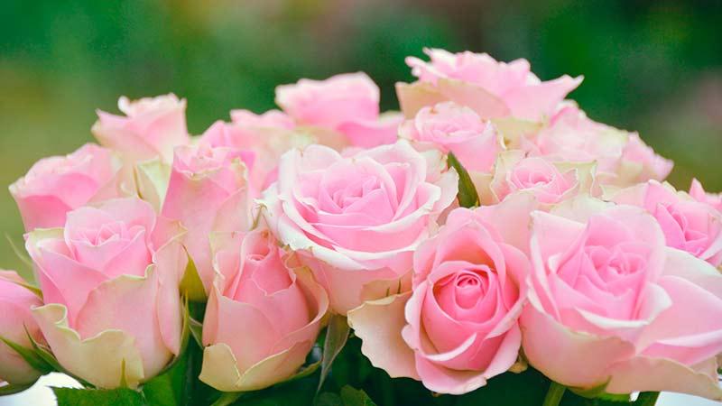 consejos para cuidar flores frescas