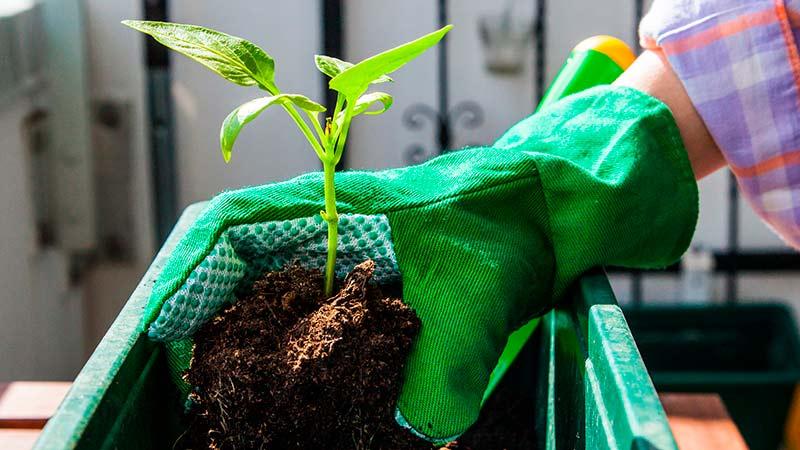 Cómo plantar un huerto urbano en casa