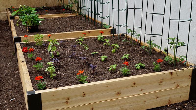 Pasos para preparar tu jardín para la primavera