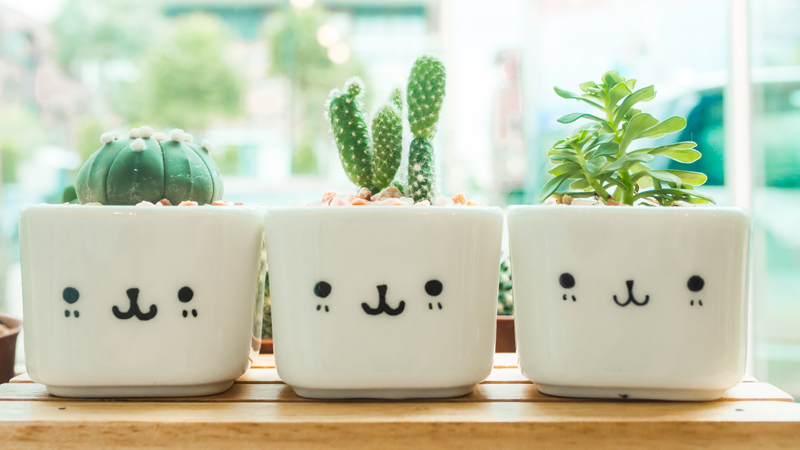 Adorable indoor cactus garden.