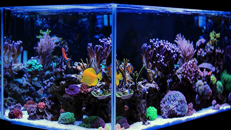 Cada cu nto cambiar el agua del acuario flota for Comida para peces tropicales acuario