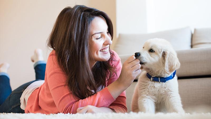 razones por las que tener un perro te proporciona bienestar