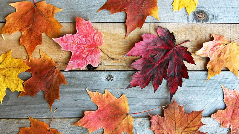 Cómo conservar hojas de otoño