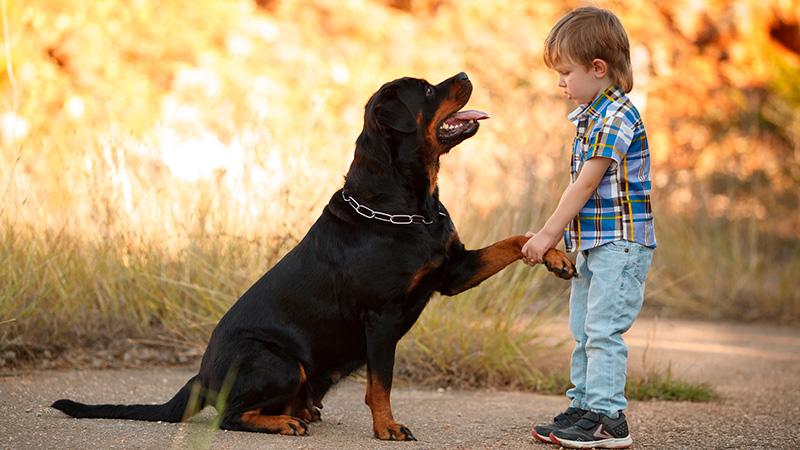 Cómo enseñar a tus hijos a interactuar con las mascotas
